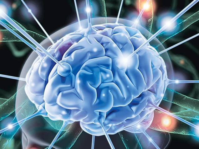 Ովքե՞ր ունեն ամենամեծ ուղեղը